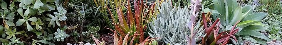 Monterey Bay Area Cactus and Succulent Society